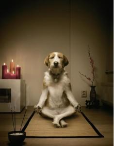 meditating-dog